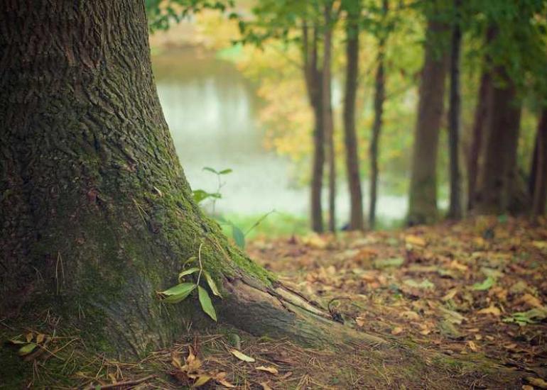 arbre-tronc-foret-pixabay