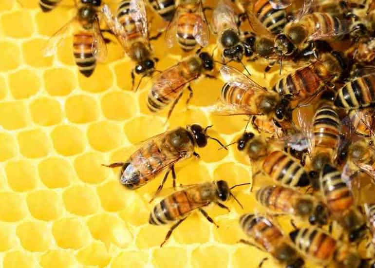 atelier-nature-abeille-ruche-loir-et-cher-pixabay