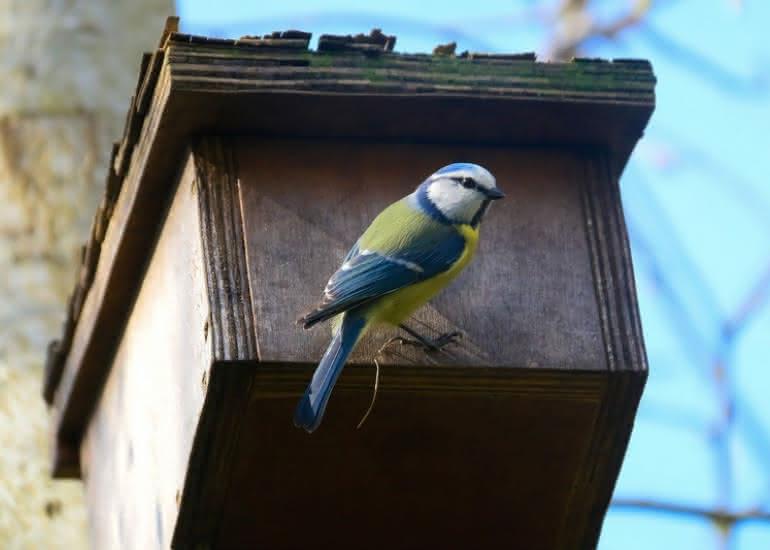 atelier-nichoir-oiseaux-loir-et-cher