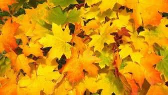 atelier-vagabond-automne-feuilles