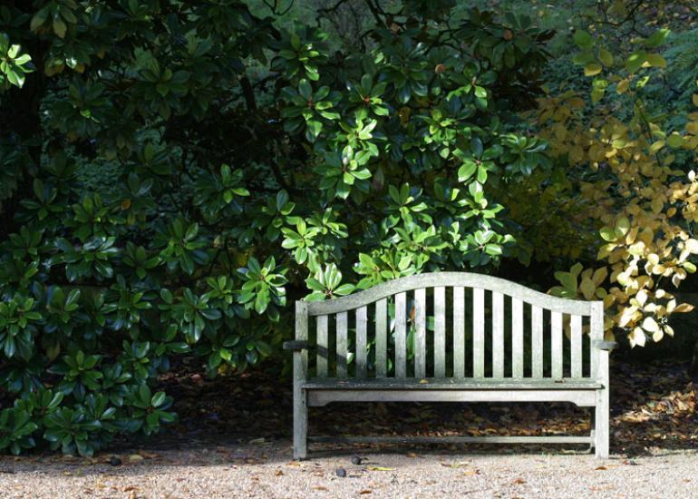 Banc en bois et Magnolia grandiflora en automne