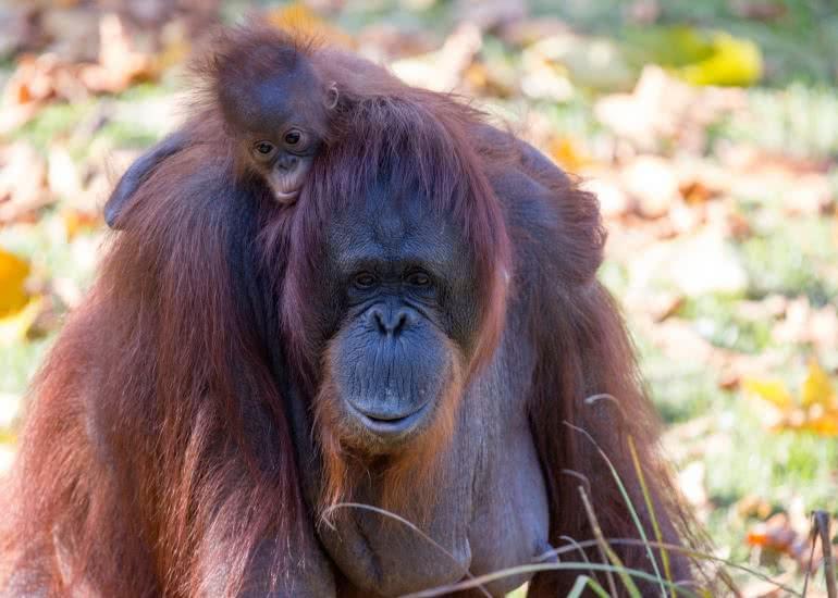 bebes-zooparc-de-beauval-28