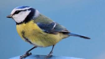 exposition-oiseau-chanteur