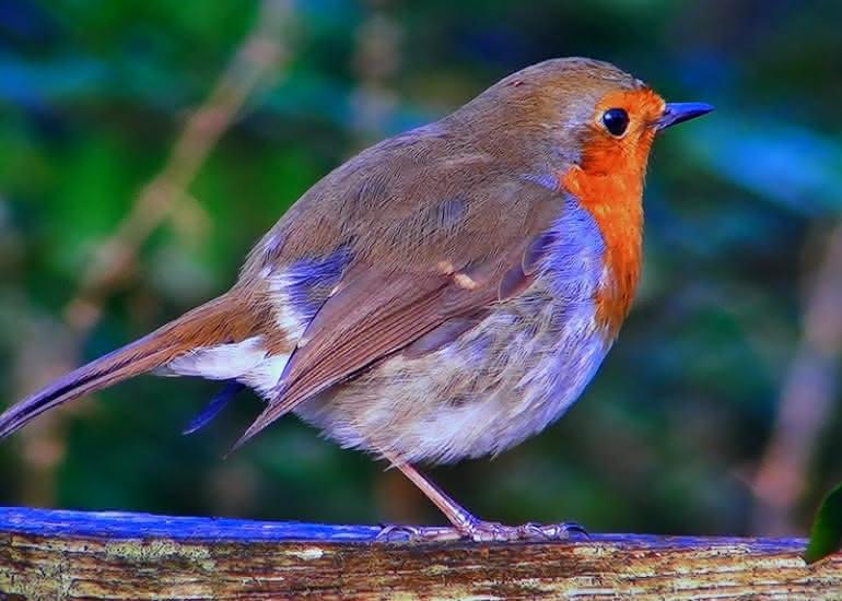 decouvertes-sologne-nature-melomane-oiseaux-loir-et-cher