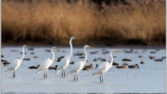 Réserve de chasse et de faune sauvage de Malzoné