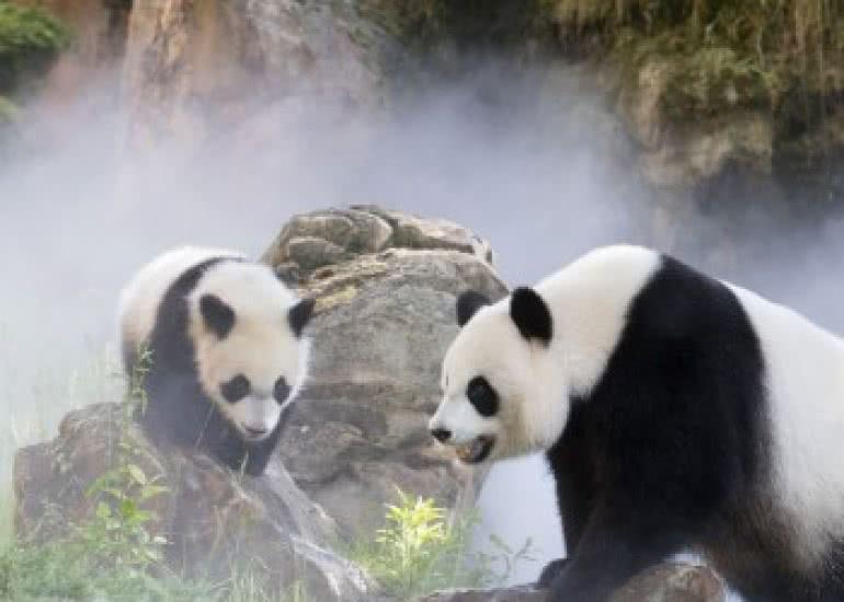fd1701-bebe-panda-yuan-meng-575