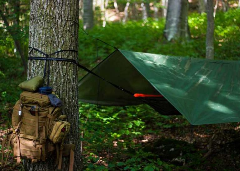 festival-camp-survival-pruniers-en-sologne-pixabay