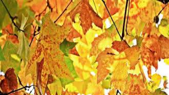 Instants nature – Pépites d'automne – Vallée du Cher – Montrichard