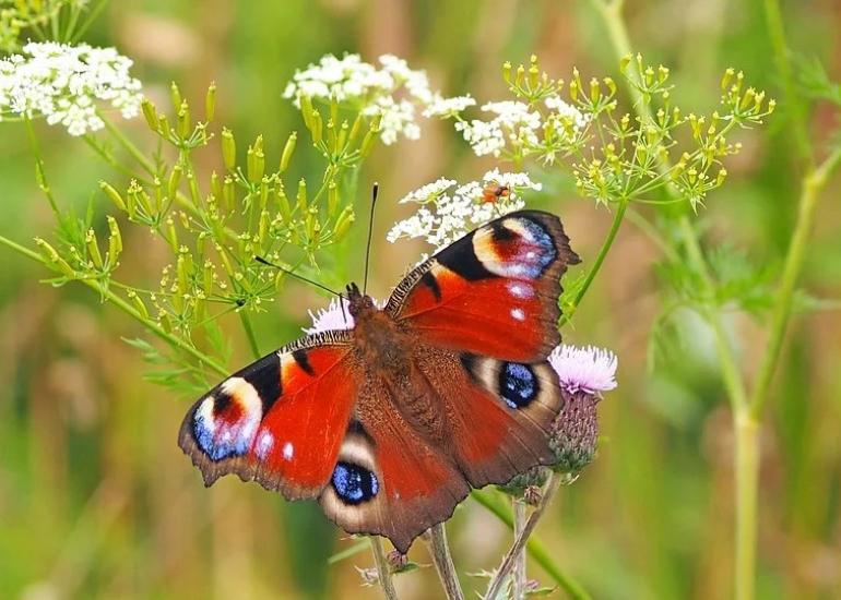 Flore et insecte