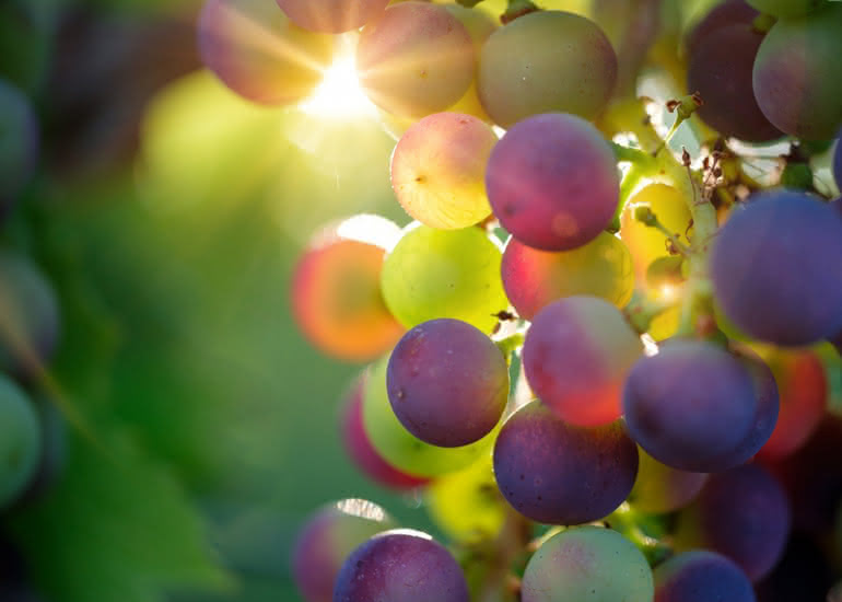 grapes-3550733-1920-5