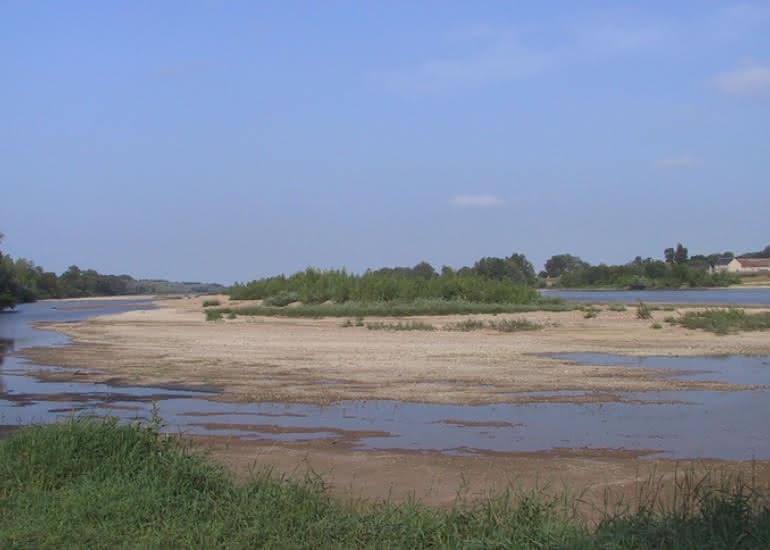 animation-nature-greve-de-Loire