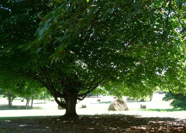 HLO-CH-Salbris-Montboulan-Parc