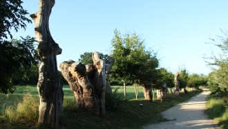 Projection du documentaire «Trognes, les arbres aux mille visages»