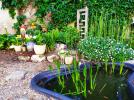 La bassin aux Salamandres de Montlivault