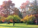 Le Moulin de Crouy parc automne