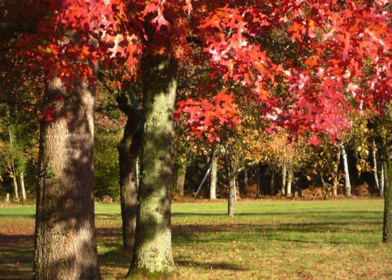 Le Moulin de Crouy parc automne 2