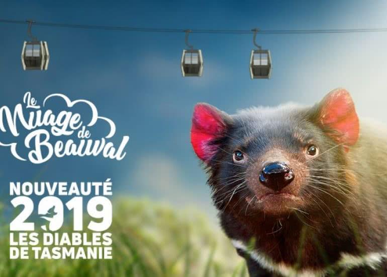 Le nuage de Beauval - Vacances en famille en Loir-et-Cher Val de Loire