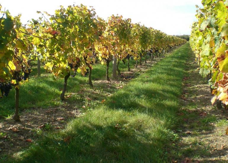 Le vignoble AOC Orléans Orléans-Cléry