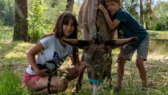 Les Ânes de Madame – Balades et randonnées pédestres avec un âne