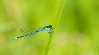 Mon Rendez-vous avec la Loire – Histoires de libellules avec l'Observatoire Loire