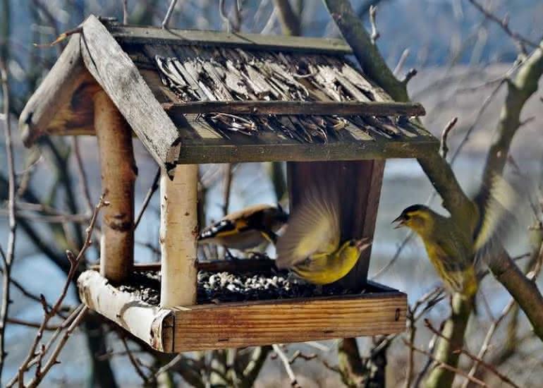 mangeoire-oiseaux---pixabay