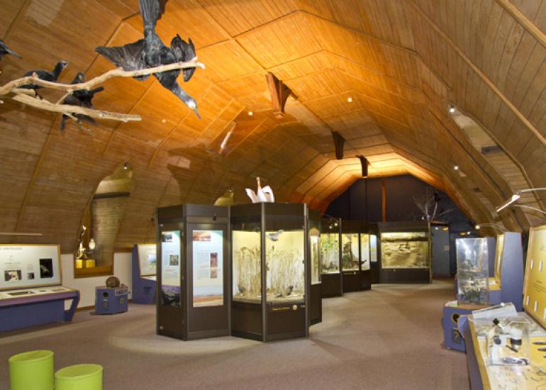 Museum-Histoire-Naturelle-Blois