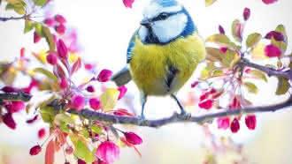 Instant Nature – Oiseaux des villes et des jardins à Vendôme