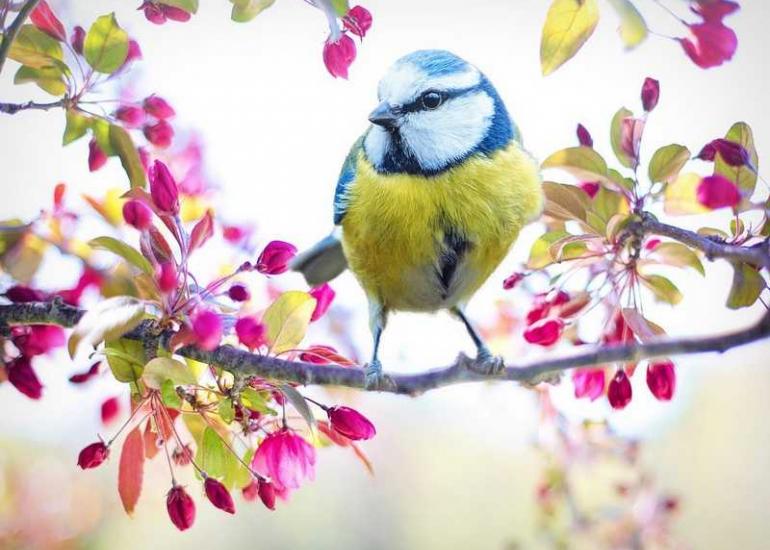 oiseau-ville-jardin-pixabay