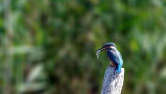 Balade nature «oiseaux et légendes» avec la Maison de La Loire