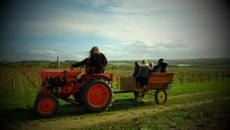 Balade insolite dans les vignes du Domaine de la Berthelotière à Villiers-sur-Loir
