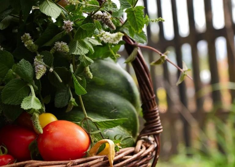 marche-panier-legumes-loir-et-cher-savigny-sur-braye