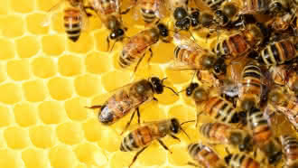 Instant Nature – Bee Api à Montrieux-en Sologne