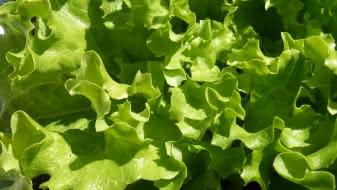 marche-Salade