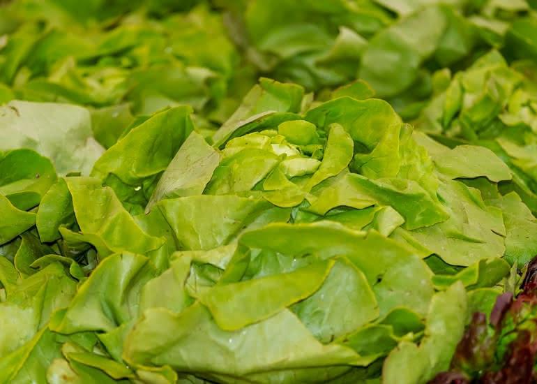 Salade - laitue