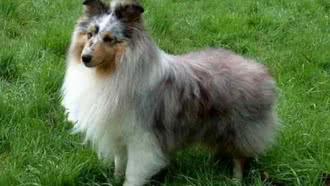 Exposition nationale d'élevage canin