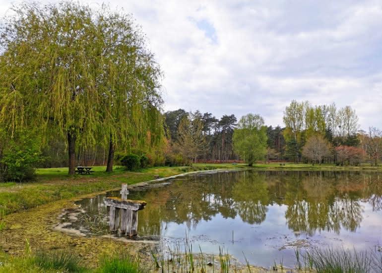 sologne-pruniers-sentier-mares-ens-balade-nature-etang