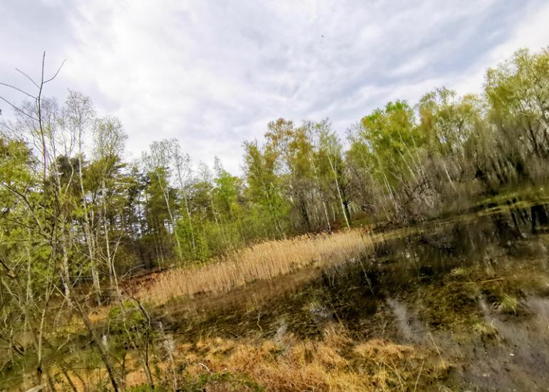 sologne-pruniers-sentier-mares-ens-balade-nature-pedagosique