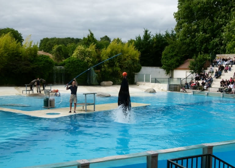 Spectacle - Otarie4_ZooParc_de_Beauval