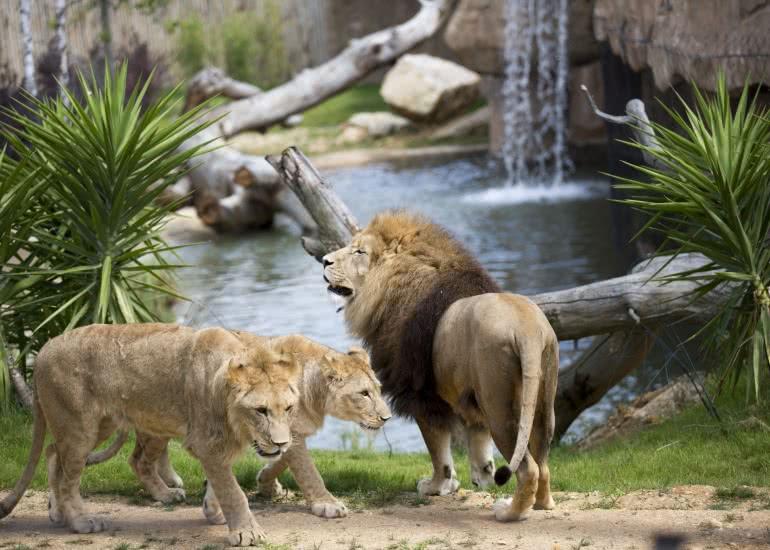 Terre-des-Lions_11