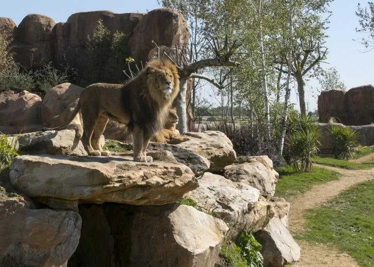 Terre-des-Lions_8