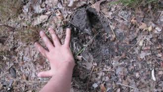 Instants Nature – Traces et indices de présence forêt de Marchenoir