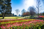 Tulipes-au-Chateau-de-Cheverny-Mir-Photos-ADT41--16-