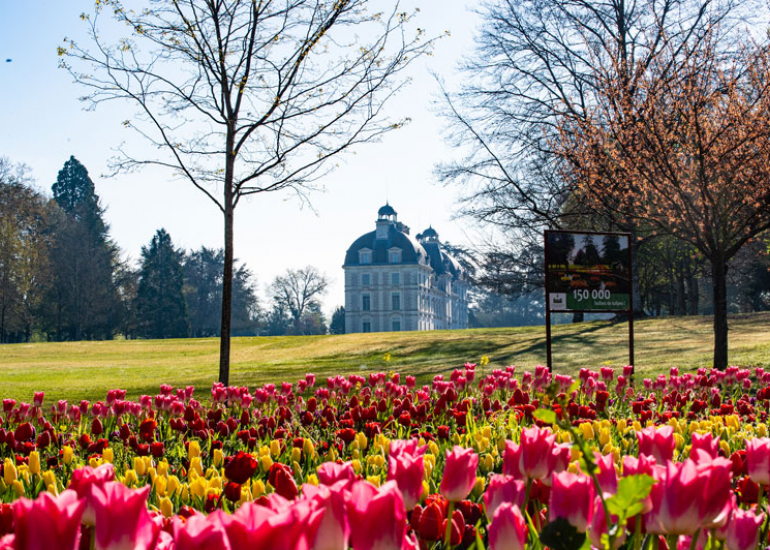 Tulipes-au-Chateau-de-Cheverny-Mir-Photos-ADT41--2-