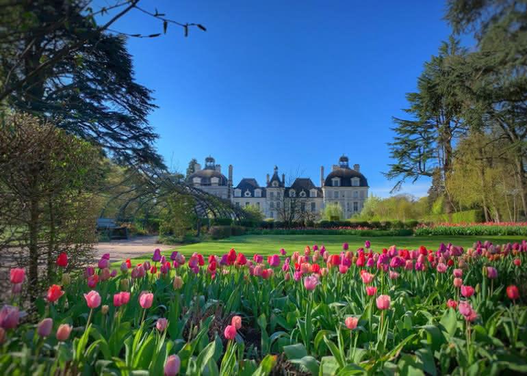 Tulipes-au-chateau-de-cheverny