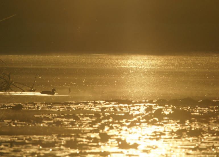 Un mardi soir au bord de l'eau avec Sologne Nature Environnement