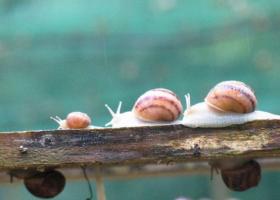 Un matin au jardin... La ferme des escargots