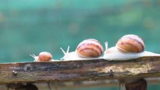 Un matin au jardin… La ferme des escargots