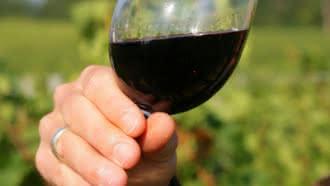 Dégustation de vin, oenologie