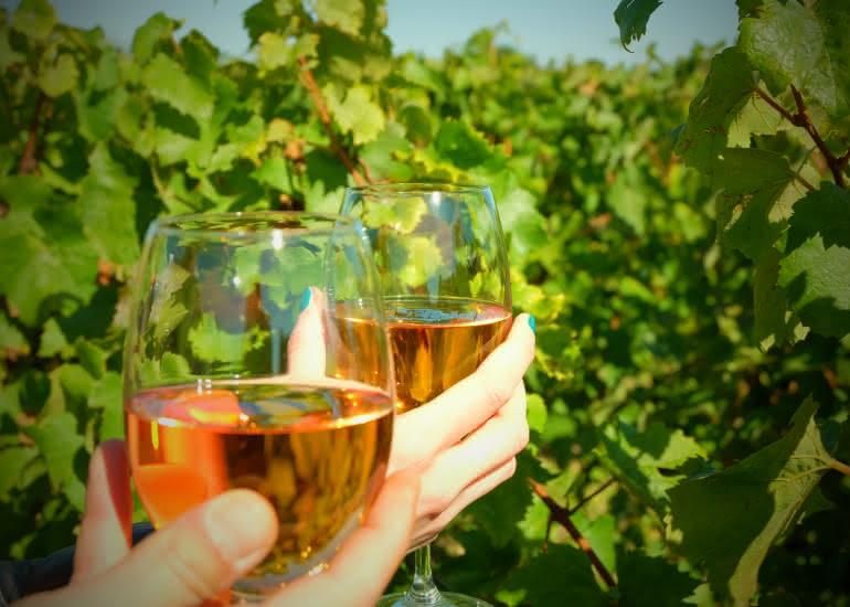 Vin-pente des coutis- Vendôme [OT Pays de Vendôme] (7)