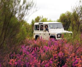 Visite de la réserve en véhicule tout-terrain